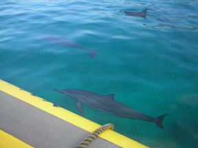 Hawaii Spinner Dolphins Snorkel Tour in Oahu Hawaii