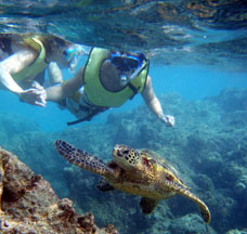 Hawaii Oahu Island Snorkel Tour