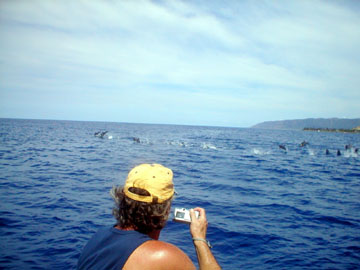 Honolulu Hawaii Dolphin Snorkel Tour Adventure