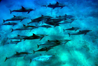 Hawaii dolphin snorkel tour adventure on oahu hawaii
