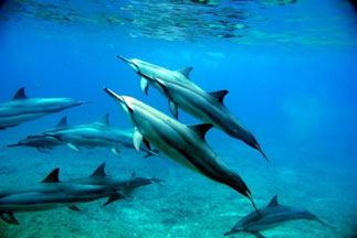 Oahu Hawaii Swim with Dolphins Snorkel Tour
